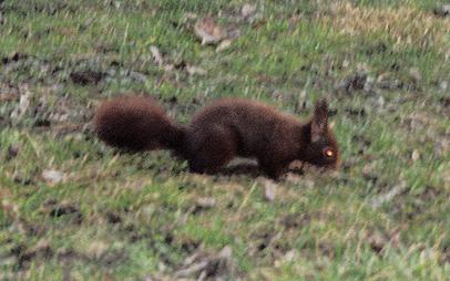 "Evil squirrel sighted in ""Le Parc"", Lyon"